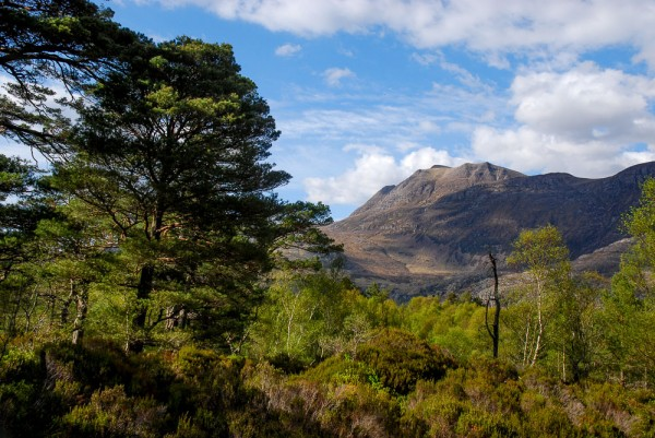 Our pick: 12 of Scotland's finest native forests