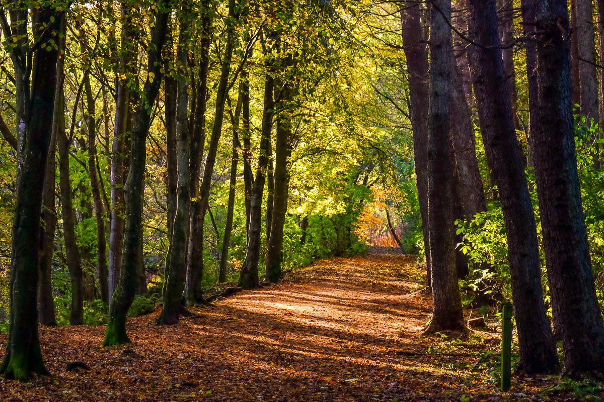 Dunnottar Woods, near Stonehaven (Walkhighlands)