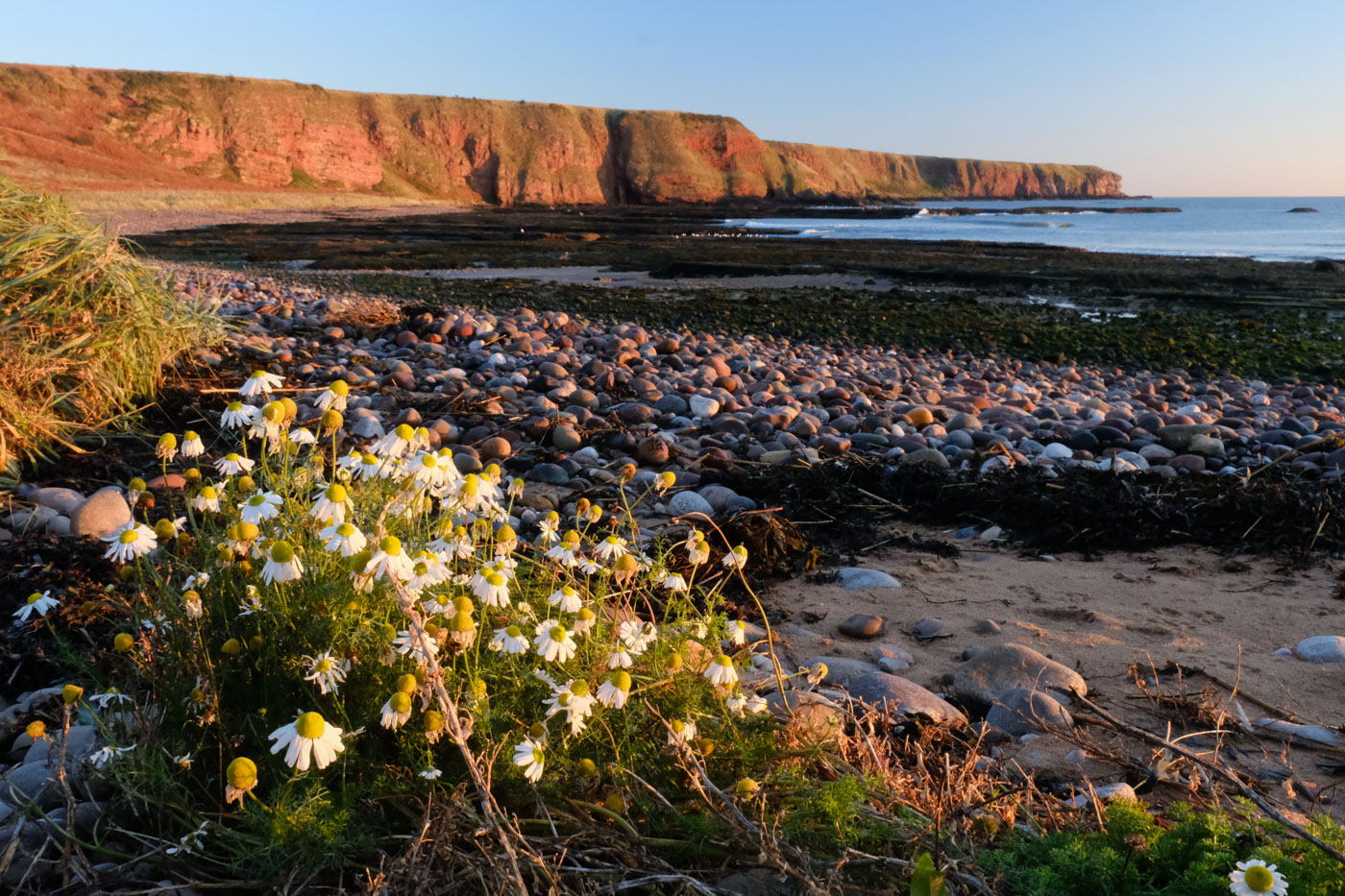 Seaton Cliffs And Auchmithie Arbroath Walkhighlands