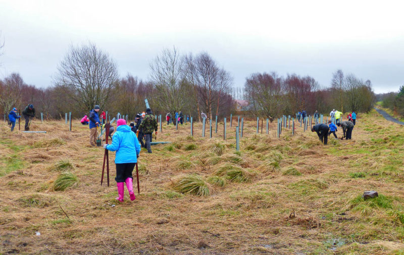 Community tree planting in Bathgate, West Lothian. 7,500,000 volunteer hours go into monitoring the UK's wildlife every year