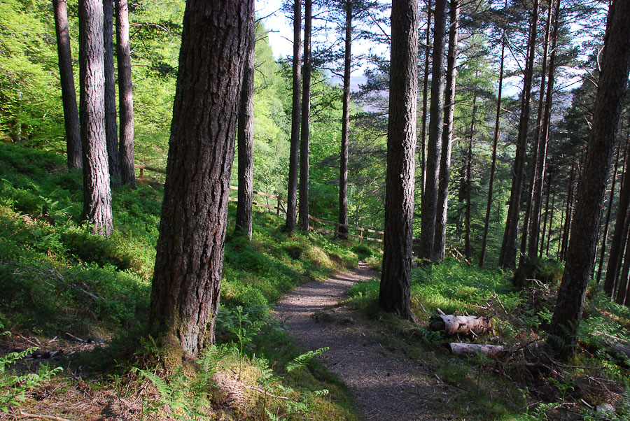 Over The Garden Walk: Lael Forest Garden And Forest Walk (Walkhighlands